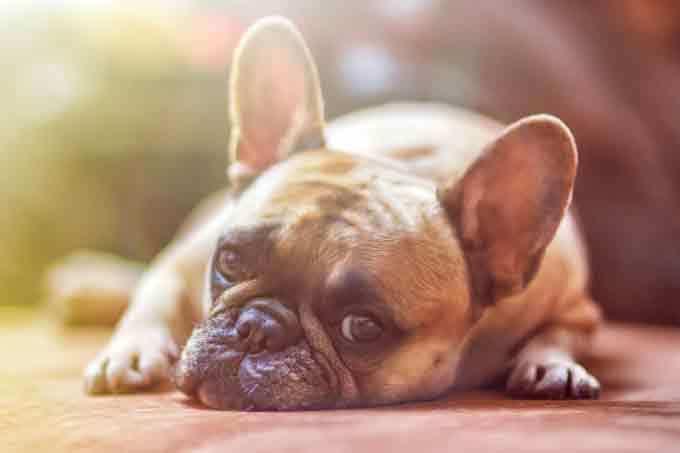 Darmsanierung Hund Heilerde