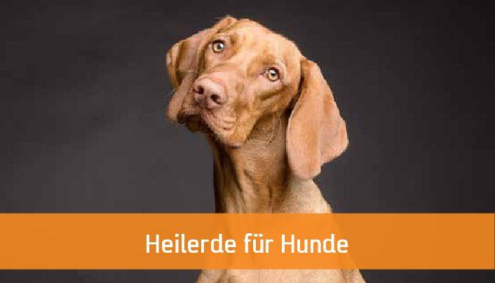 Heilerde für Hunde
