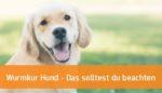 Wurmkur Hund - Das solltest du beachten