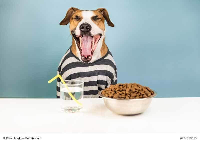 Hundefutter-Deklaration – Das musst du wissen