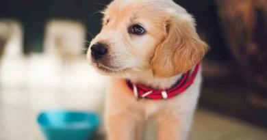 Grundlagen Hundeernährung