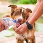 Wasserbedarf Hund – So hoch ist der tägliche Wasserbedarf eines Hundes