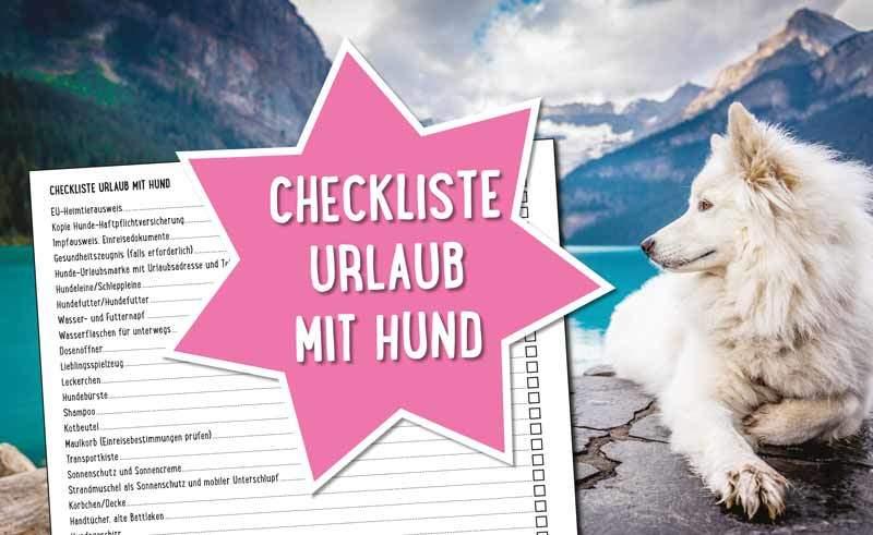 Checkliste Urlaub mit Hund zum Ausdrucken und Teilen