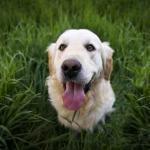 Futterumstellung Hund - Das solltest du unbedingt beachten