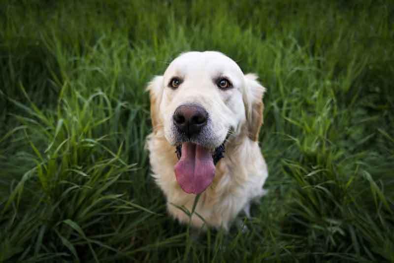 Futterumstellung Hund – Das solltest du unbedingt beachten