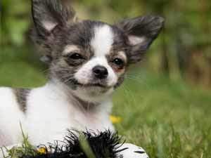 Hund Verdauung