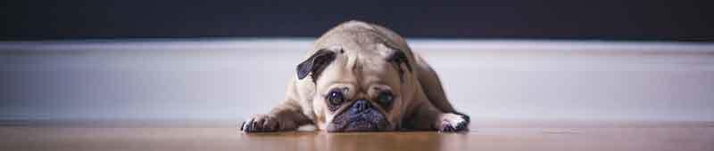 Hund zu dick