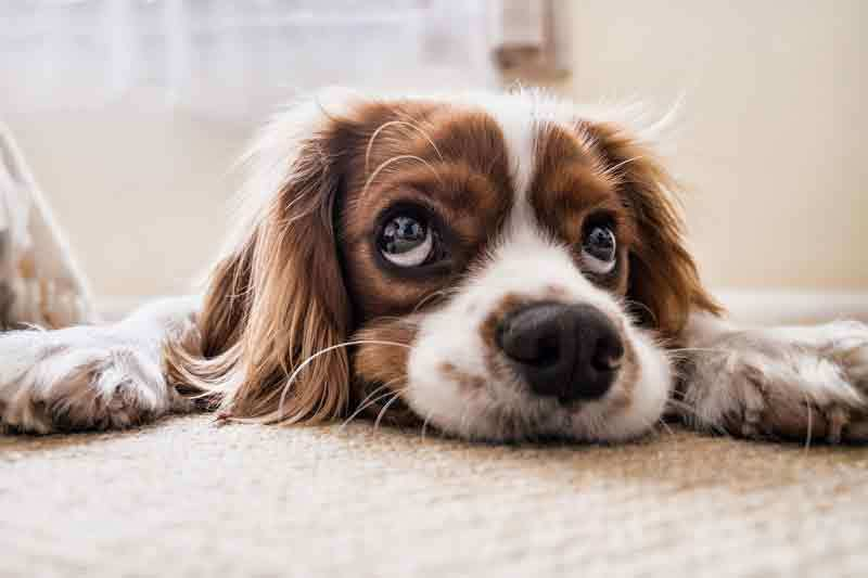 Hundediät – Diese 4 Punkte solltest du beachten, wenn dein Hund abnehmen muss