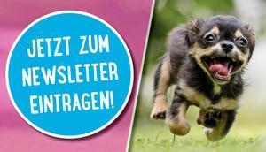 Hundefutter Blog