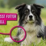 So beeinflusst Futter das Hundefell