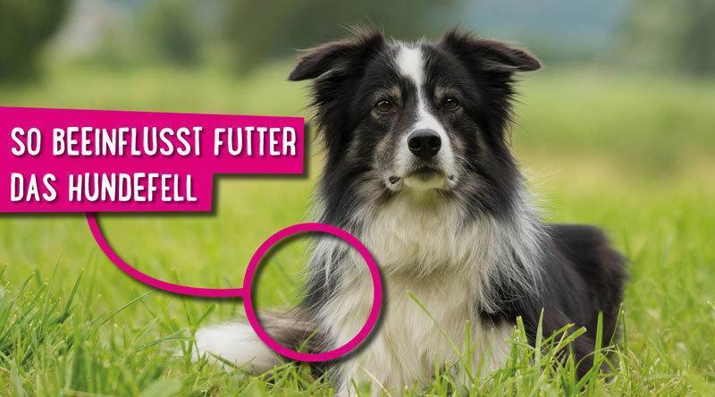 Hundefutter Fell