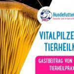 Vitalpilze in der Tierheilkunde (Gastbeitrag)