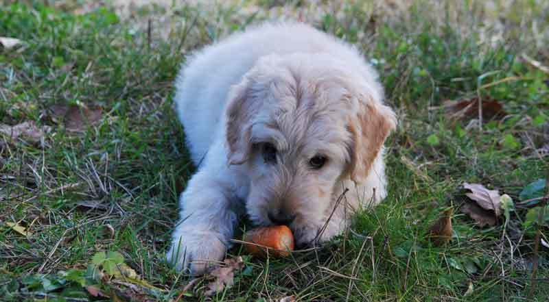 Vitamine Hund