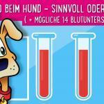 Blutbild beim Hund – Sinnvoll oder nicht? ( + mögliche 14 Blutuntersuchungen)
