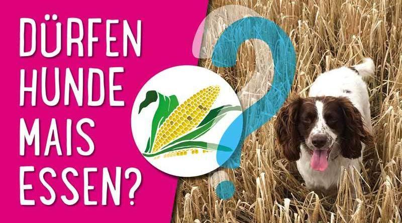 Dürfen Hunde Mais essen