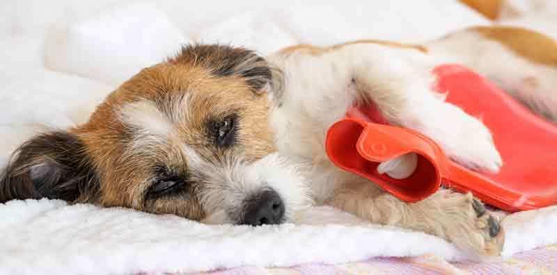 Hund Bauchschmerzen