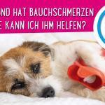 Mein Hund hat Bauchschmerzen – wie kann ich ihm helfen?