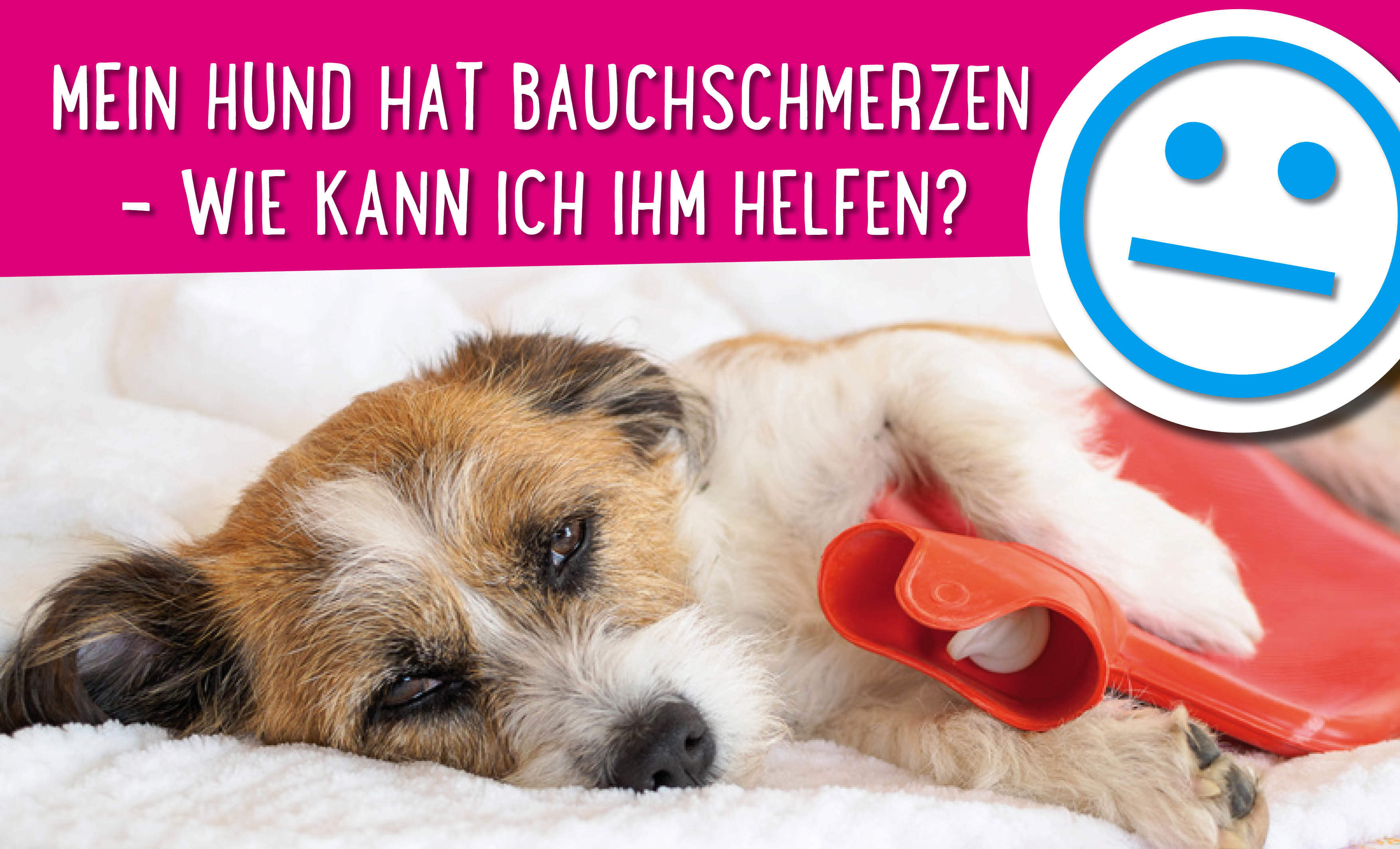 Hund hat Bauchschmerzen
