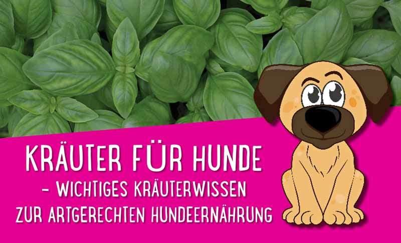 Kräuter für Hunde – Wichtiges Kräuterwissen zur artgerechten Hundeernährung 🌿🌿🌿