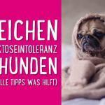 5 Anzeichen für Laktoseintoleranz bei Hunden (+ wertvolle Tipps was hilft) 👍