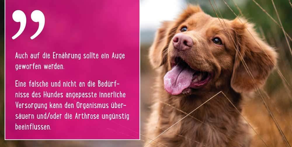 Physiotherapie beim Hund selber machen
