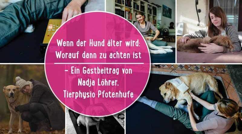 Physiotherapie Hund