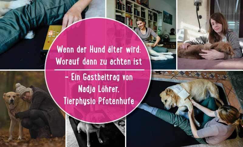 Wenn der Hund älter wird – worauf dann zu achten ist: Eine große Liebeserklärung an graue Schnauzen (Gastbeitrag von Nadja Löhrer, Tierphysio Pfotenhufe)