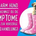 Reizdarm Hund - So erkennst du die Symptome (+Tipps zur Vorsorge und Behandlung)