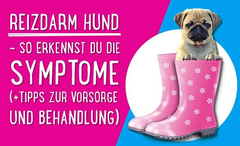 Reizdarm Hund – So erkennst du die Symptome (+Tipps zur Vorsorge und Behandlung)