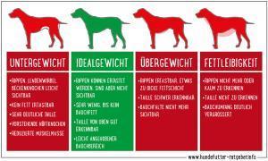 Übergewicht Hund erkennen