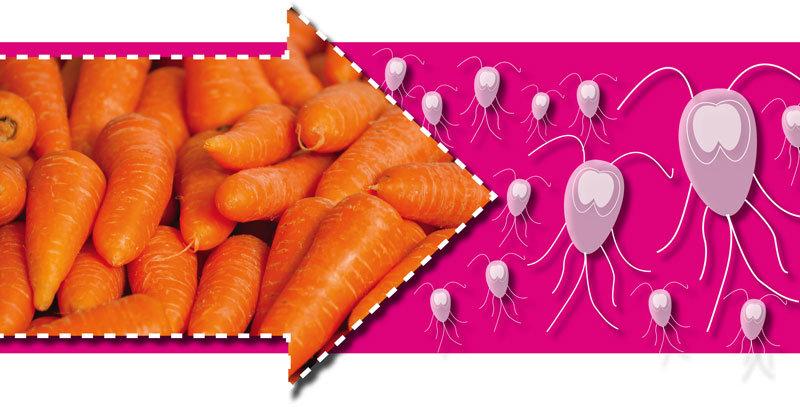 Morosche Karottensuppe bei Giardien