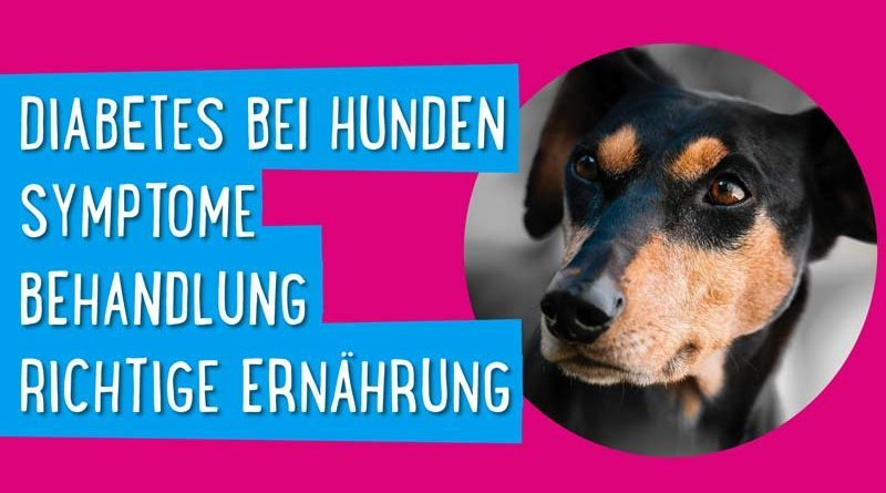 Diabetes bei Hunden