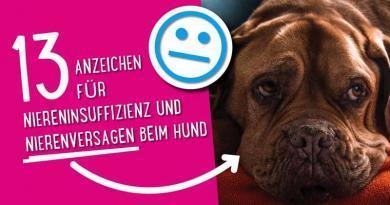 Nierenversagen beim Hund