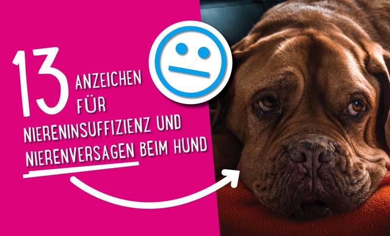 13 Anzeichen für Niereninsuffizienz und Nierenversagen beim Hund 😕