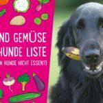 Obst und Gemüse für Hunde Liste – Lecker und gesund (+ Was dürfen Hunde nicht essen?)