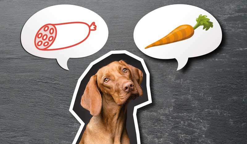 Hund vegan