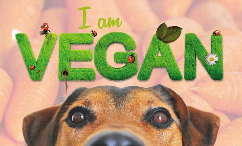 Hund vegetarisch ernähren