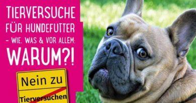 Hundefutter ohne Tierversuche