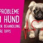 Herzprobleme beim Hund – Anzeichen, Behandlung & weitere Tipps