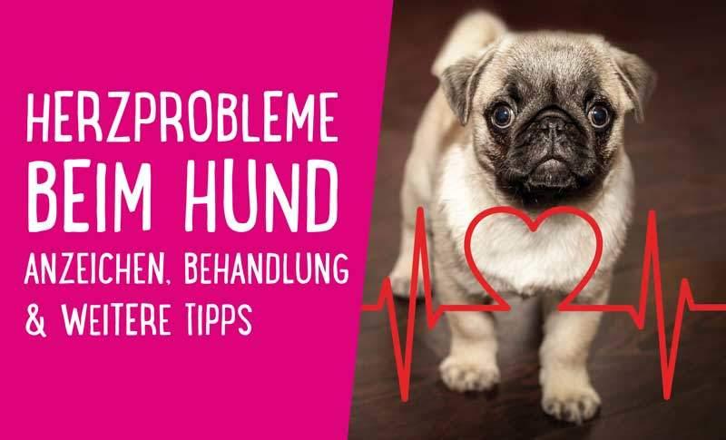 Herzprobleme beim Hund