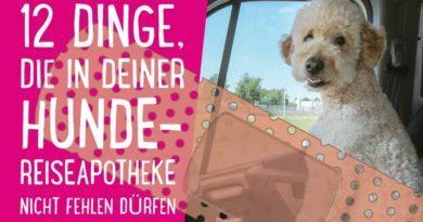 Hunde-Reiseapotheke