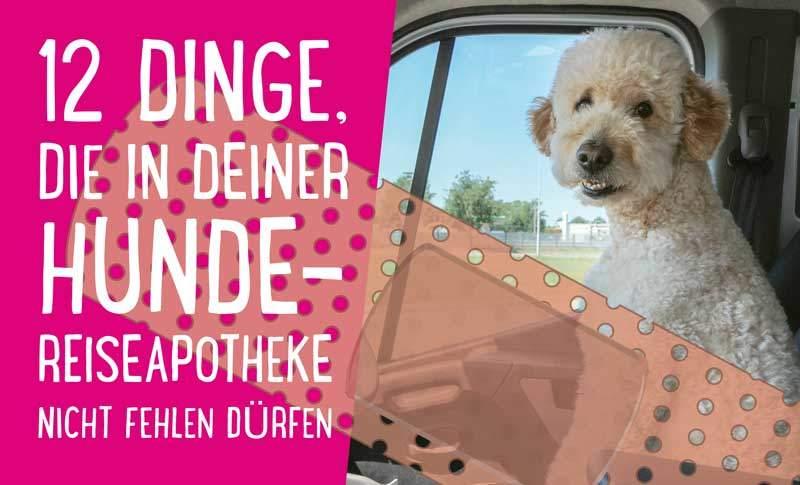 12 Dinge die in deiner Hunde-Reiseapotheke nicht fehlen dürfen
