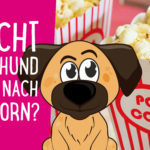 57 Fun Facts über Hunde & ihr Verhalten
