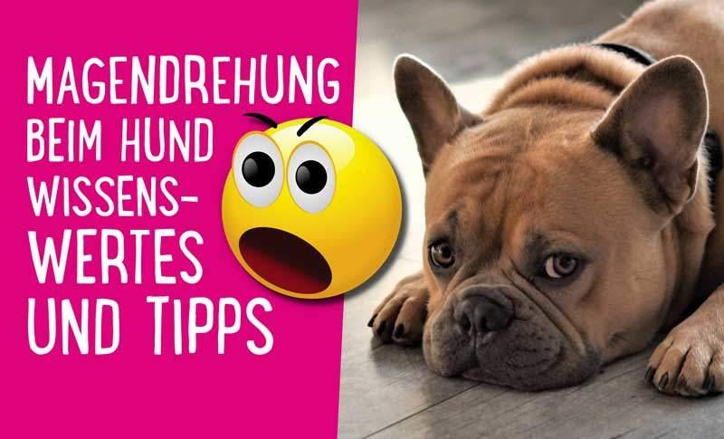 Magendrehung beim Hund – Wissenswertes und Tipps