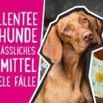 Kamillentee für Hunde – ein verlässliches Hausmittel für viele Fälle