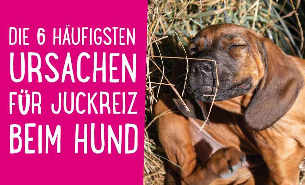 Hund kratzt sich: Die 6 häufigsten Ursachen für Juckreiz beim Hund