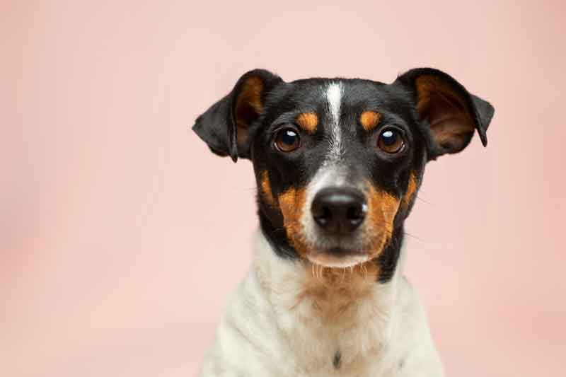 IBD Hundefutter