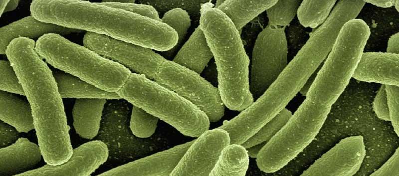 BARF-Bakterien-und-Keime-in-rohem-Fleisch