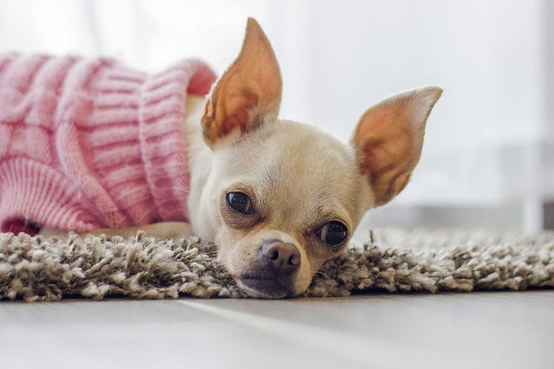 Mein Hund hat Blasensteine, was kann ich dagegen tun? ❗ Symptome, Behandlung und wichtige Tipps