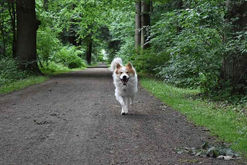 So erkennst du, ob dein Hund das richtige Futter bekommt ➡️ Energiemangel ❔ Energieüberschuss ❔ Hier erfährst du es